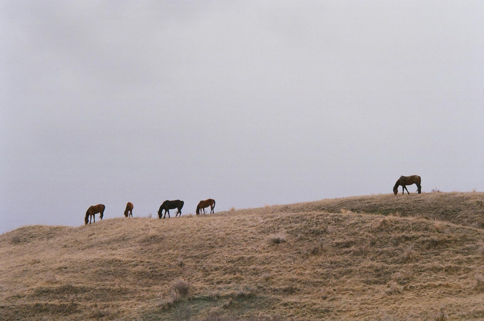 Horses in Creek Hills
