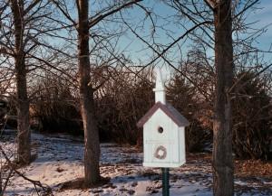 Birds in church