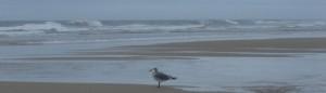 cropped-Seagull.jpg